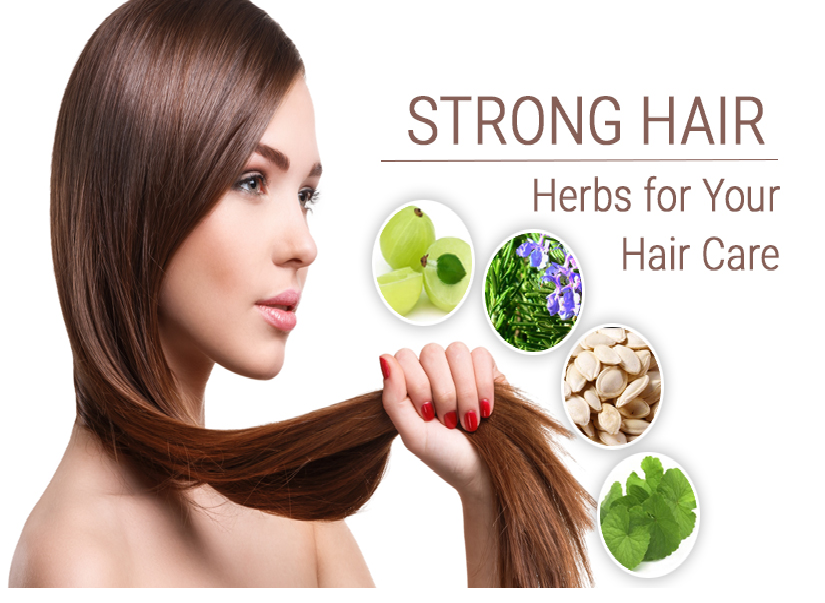 strong hair herbs for your hair care